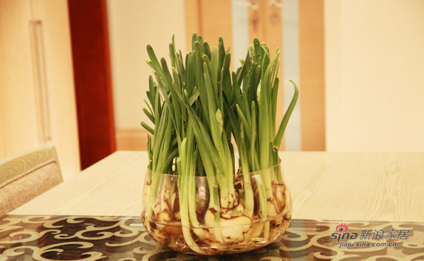 餐厅小植物
