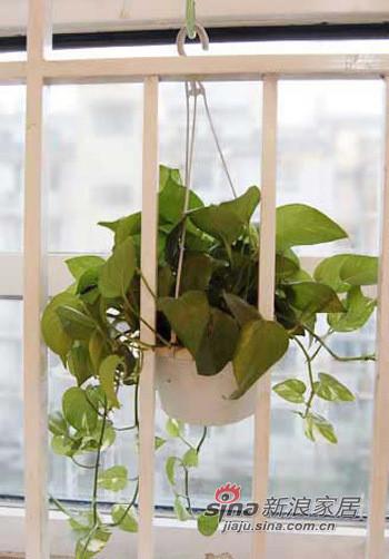 厨房阳台植物。