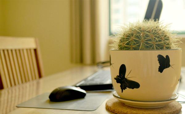 书房装饰植物