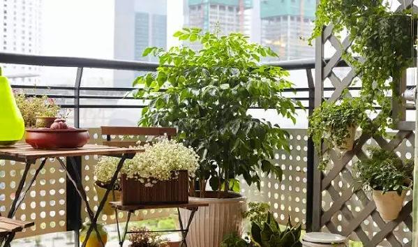 ▲ 休闲花园式阳台
