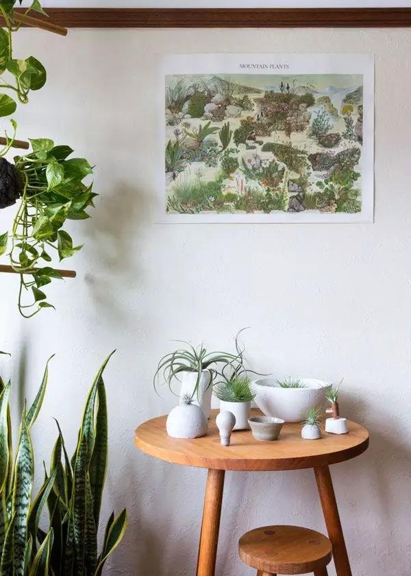 在新装修的房子里可以摆放一些吸收甲醛效果比较好的绿萝、芦荟、白掌等。