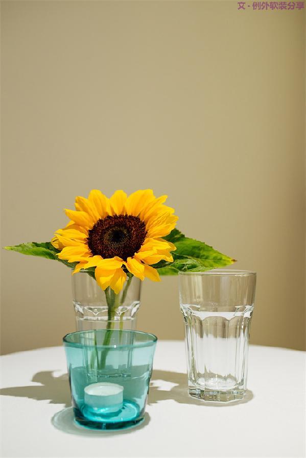 """3、向日葵Sunflower & 温暖治愈系    被梵高誉为""""落在地上的太阳"""",满满的正能量寓意备受爱戴,其喜温又耐寒,温度不低于10℃,就能正常生长。暖心黄色系,治愈满满,也被称之为""""沉默的、没有说出口的爱"""""""