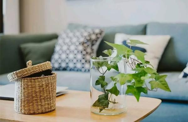 在小茶几上摆放着常春藤,看到之后心情也能大好,还有这个编织储物盒,既美观又实用,放点小物件什么的真的很方便哦~