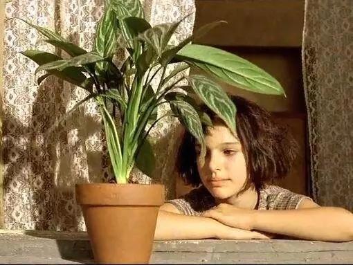 """如果你不想""""佛系""""到底,那家里可少不了这些超好养的绿植"""