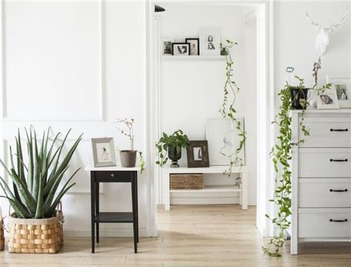 """这个植物设计师,花15万用60株绿植,在98㎡的家里打造出一片""""小森林""""!"""