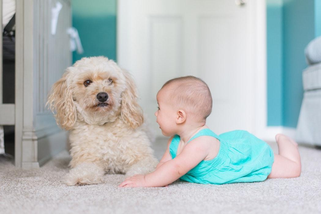 即将迎来小宝宝的家庭,要怎么装修儿童房?快来取经!