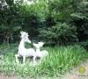 东面通道的由石板路与母子鹿的小景组成