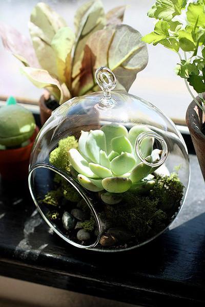 植物可是点缀家居生活中不可缺少的一笔,有些植物既招财,又能吸收辐射,对健康有帮助!