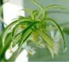 那些美观健康的花花草草