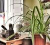 阳光满溢下的绿色盆栽、搭配黑白风的花样壁纸、各种花色的装饰画、温馨柔美的碎花布艺,混搭出了田园美式小屋。