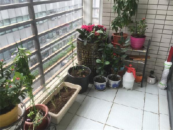 """徐静注意到,阳台上别出心裁的腾出了一方园地种植花草。这一隅让我们窥见了夫妻俩内心埋下绿意与情调。徐静灵感迸发,""""秘密花园""""的设计构想在心里渐渐成形。"""