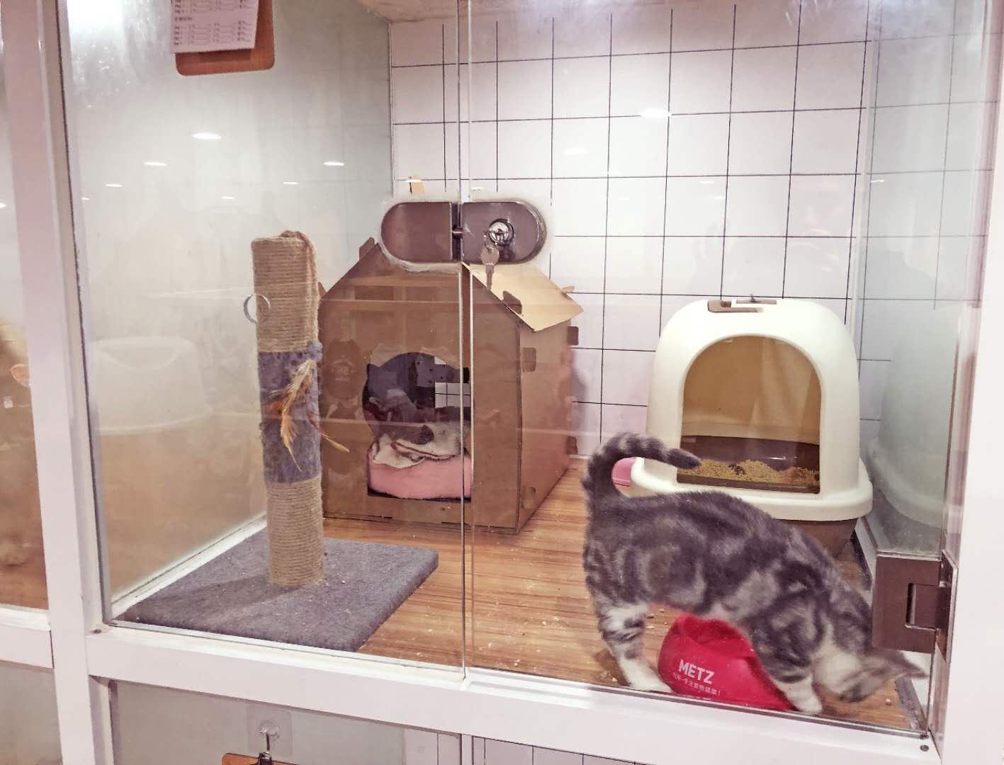 图片来自汀婷在NEMO 宠物管家的分享