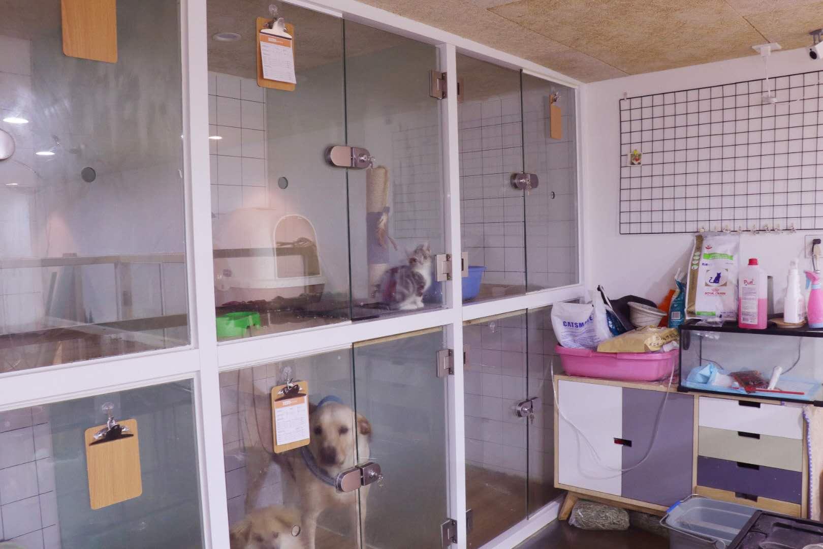 宠物店 90后图片来自汀婷在NEMO 宠物管家的分享